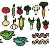 太い線が独特な野菜の無料ベクタークリップアート素材