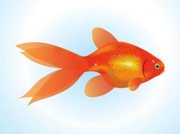 FreeVector-Goldfish-Vector-600x449 金魚の無料ベクターイラスト素材