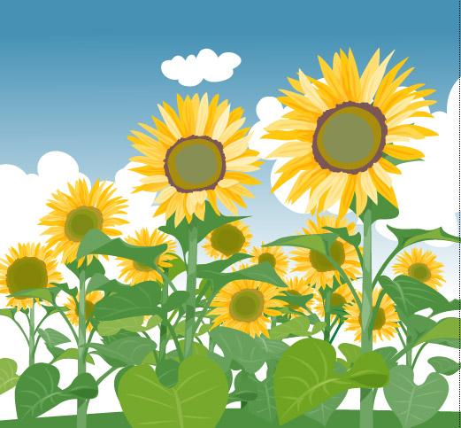 Sunflower-cloud-vector 青い空、白い雲、ひまわり。無料ベクターイラスト素材