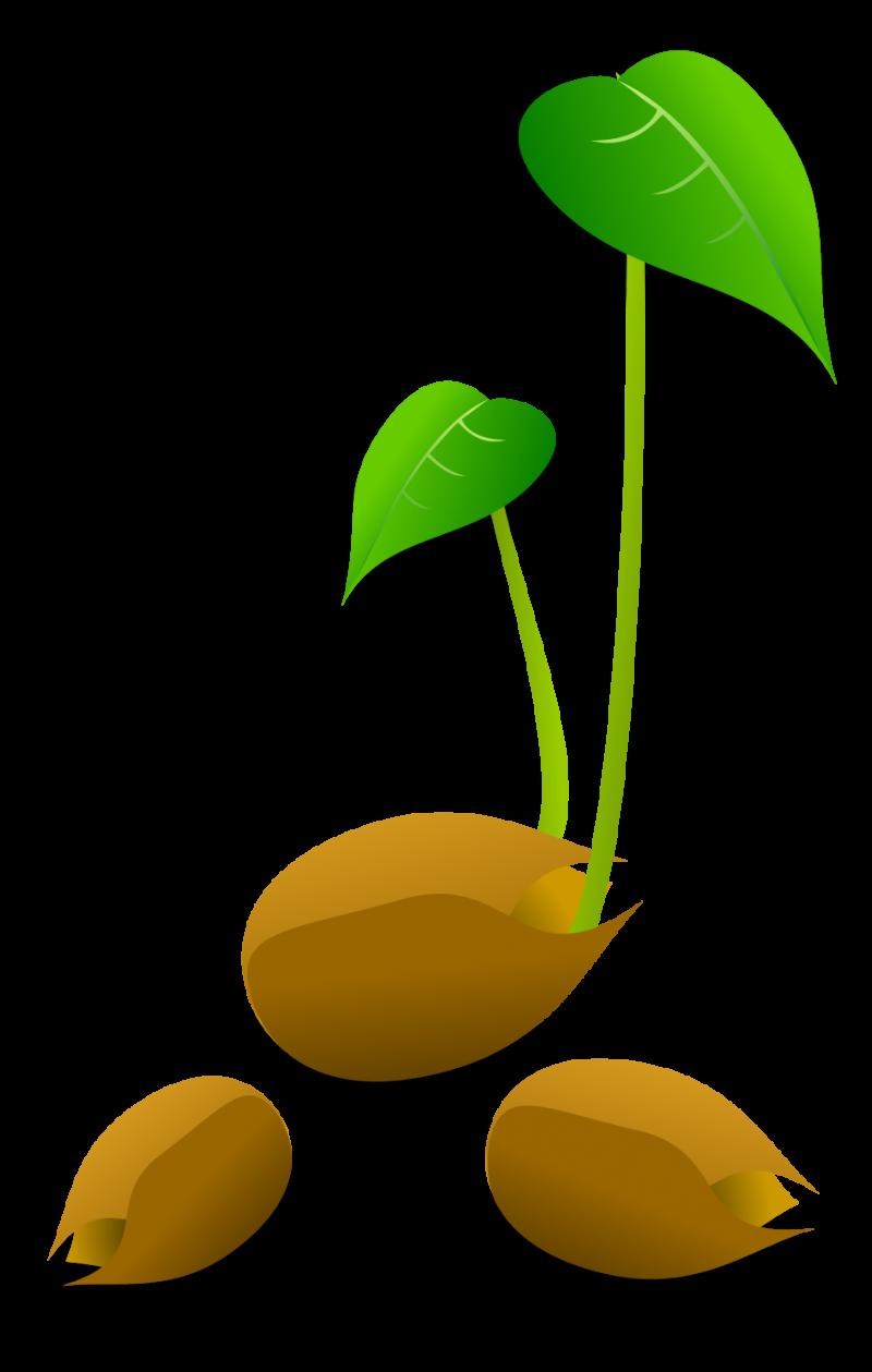 グリーンがきれい!かわいい発芽のベクターイラスト素材 - all free