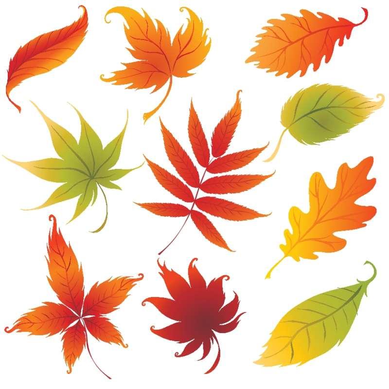 秋のイラスト 10種類の紅葉した落ち葉のベクタークリップアート素材