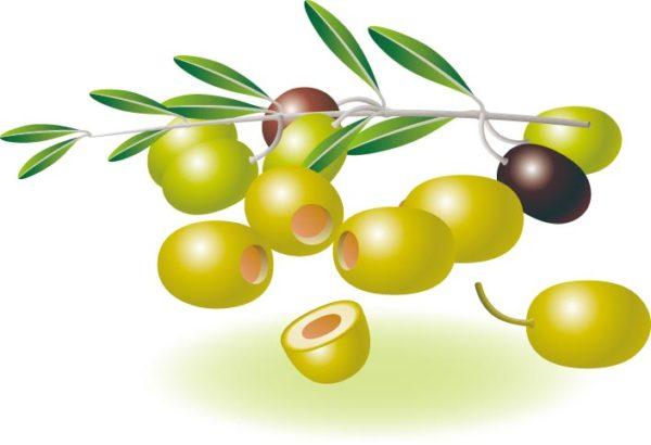 olive_vectormadness-600x410 無料ベクターイラスト素材。完熟オリーブの実