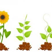 Eco-germinal-plants